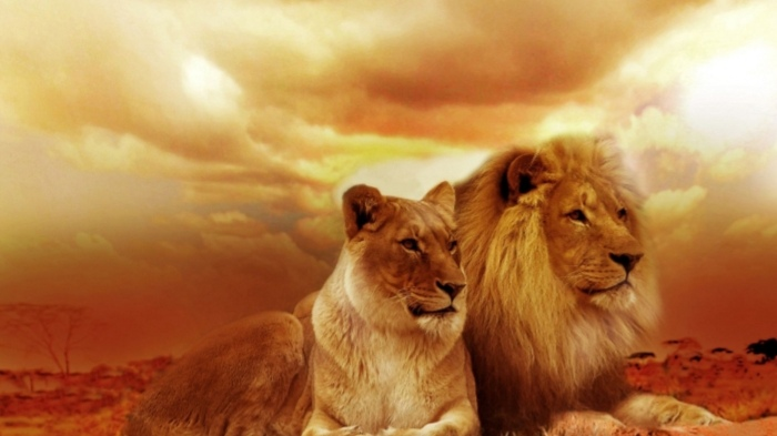 An Elephant or a Lion leadership you belongs to?